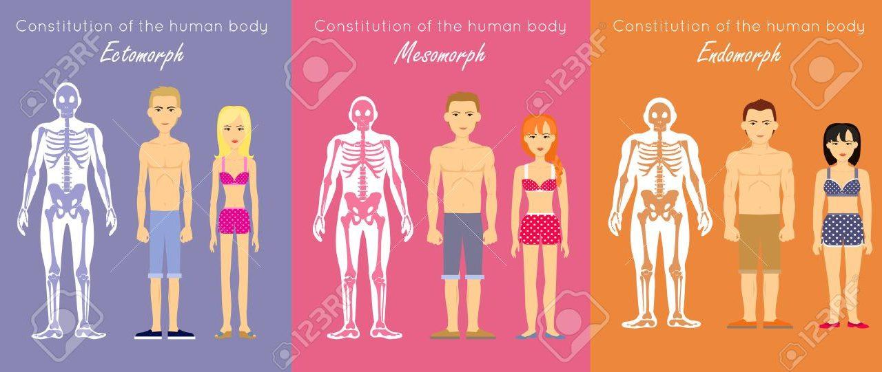 体型,男,女